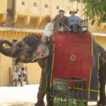 Riding an Elephant at Amber Fort in Jaipur